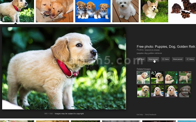 "View Image为Google图片搜索添加""查看图片""和""以图搜图""按钮"